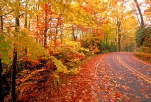 fall leaves road