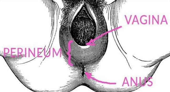Perineum tear healing time illustration