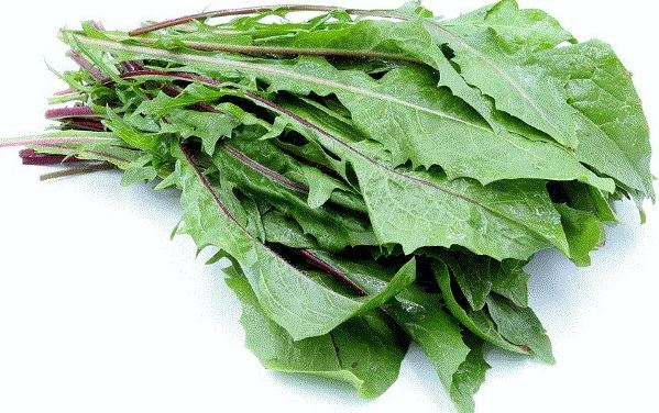 Using dandelion leaves to test for pregnancy