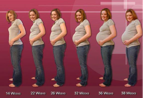 Pregnancy Tummy Growth Chart Carnavalsmusic