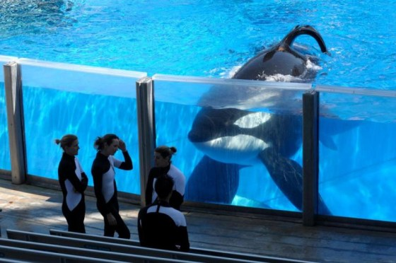 black-fish-orca
