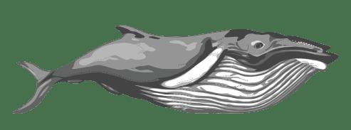 ocean-whale