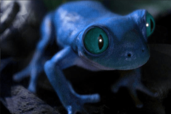 Creative Campaigns #12 – Bud Light brings back the famous frogs