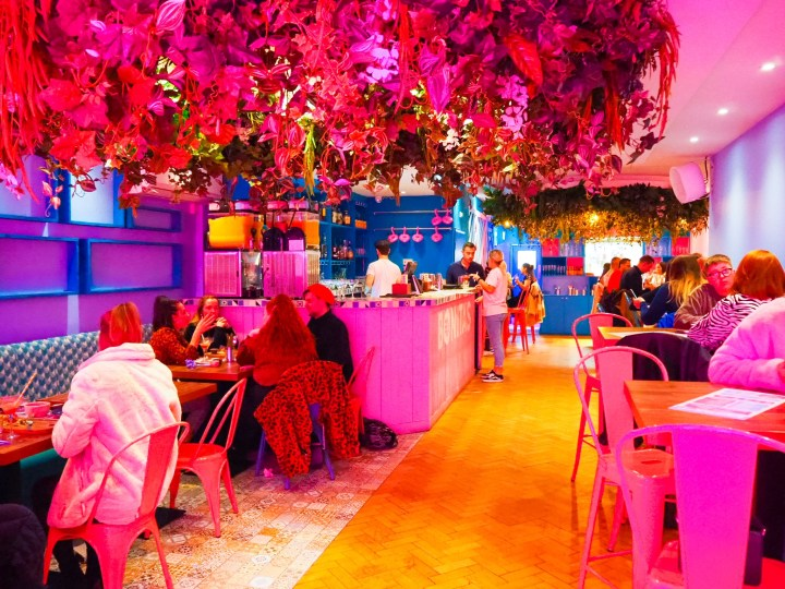 A view of the interior of Bonita's with tables and chairs in bright pink and blue and plants hanging from the ceiling.