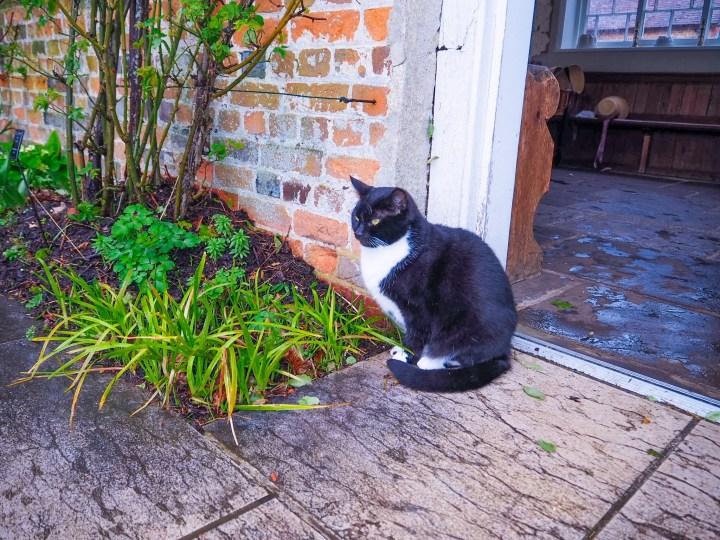 Marmite, the cat at Jane Austen's House