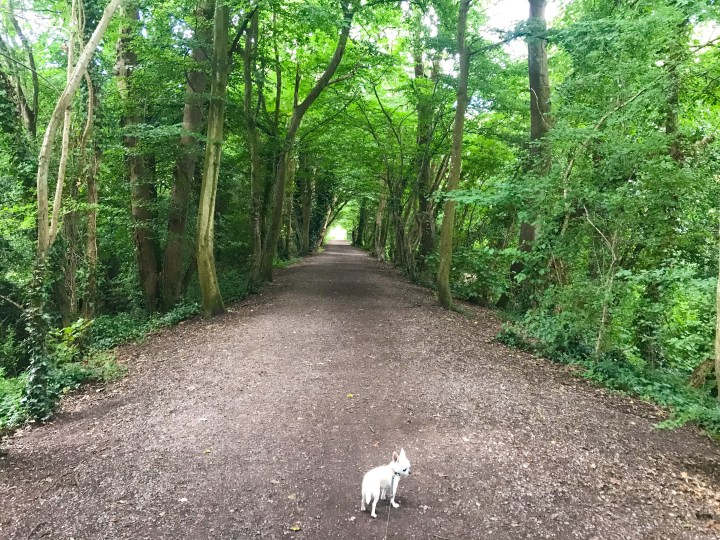 The walk along the Meon Valley Trail that takes in Wickham Water Meadows