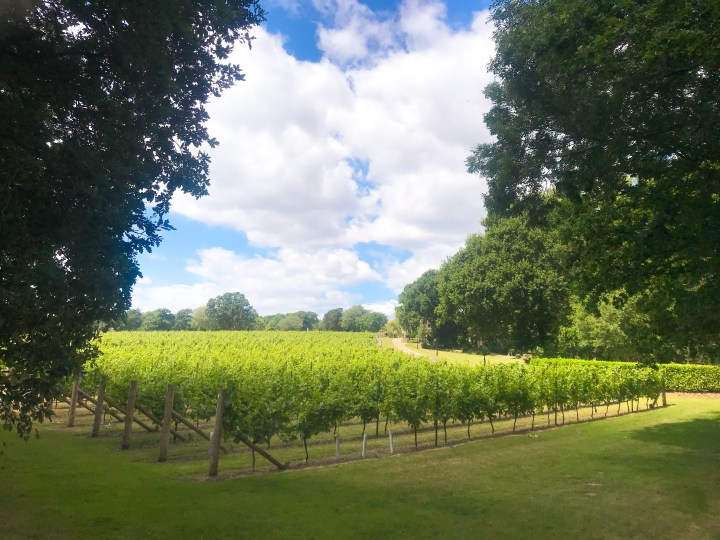 The view at Wickham Vineyard just up from Wickham Water Meadows