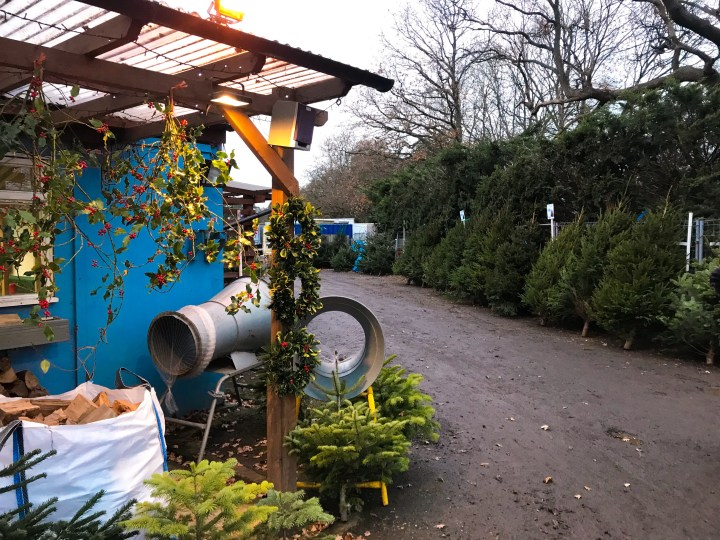 Where to get real Christmas trees in Hampshire 2020