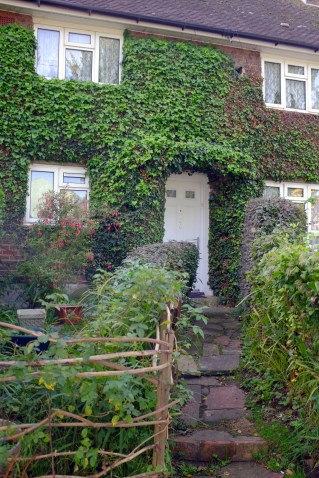 Whitehawk home - carefully grown and tended ivy as a home for wildlife and attractive front garden. Brighton