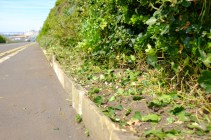 A neat edge - vegetation management at Madeira Drive green wall