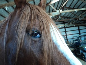 Here's Looking at You Horse
