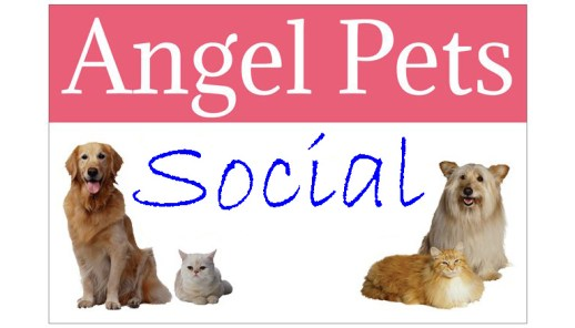 Angel Pets Expo sign picture copy