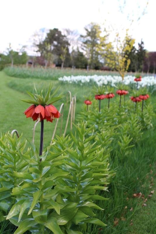 brightwater gardens april blog 5
