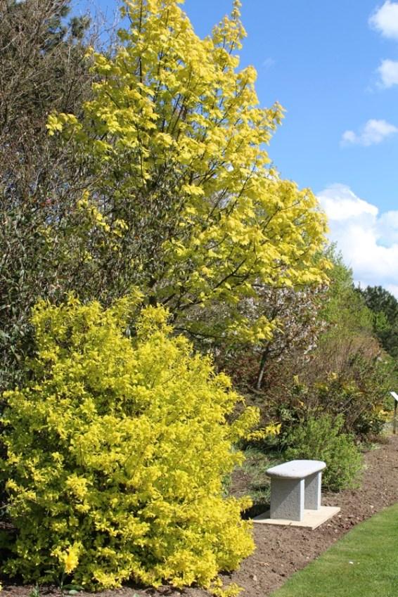 brightwater gardens april blog 7