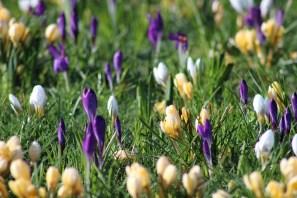 brightwater-gardens-saxby-lincolnshire-snowdrops-winter-gardens-3