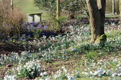 brightwater-gardens-saxby-lincolnshire-snowdrops-winter-gardens-6