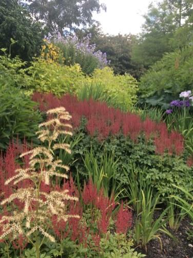 damp-garden