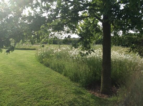 wildflower-area-nr-pond