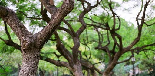 PHP 7 Trees
