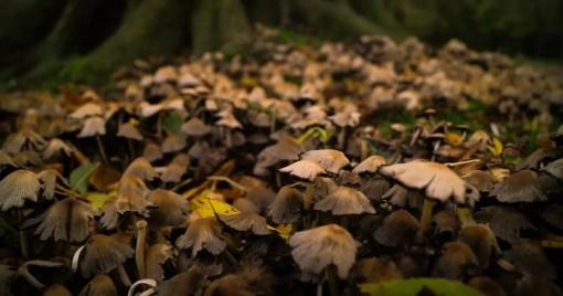 What is Rust Programming Language Fungi Mushroom