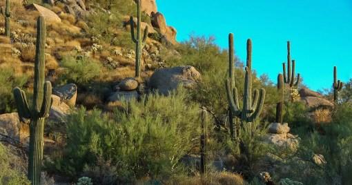 Desert Southwest Software Symposium Phoenix Arizona