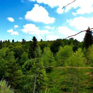 Urlaub in. Villingen Schwarzwald