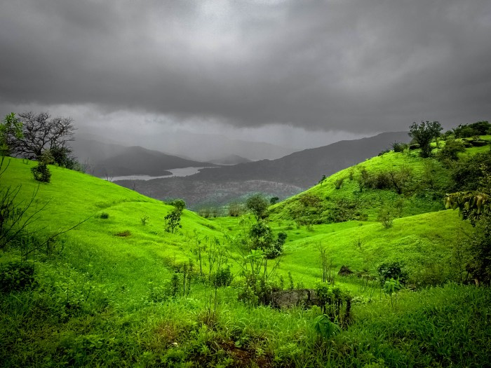MAHABALESHWAR GREEN GRASSLANDS INDIA PICTURE CLICKED BY BRIJESH KAPOOR PHOTOGRAPHY