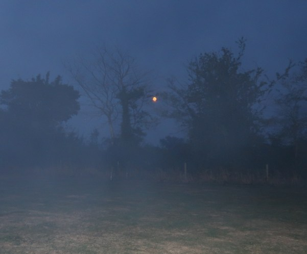 The Mist Came Down