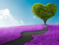 bigstock-Heart-Tree-45784669