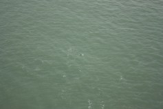 Probably the clearest dolphin shot I got. You still need to squint.