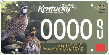 The National Bobwhite Conservation Initiative (NBCI)