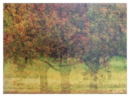Kalender drei Bäume_3516Rweb