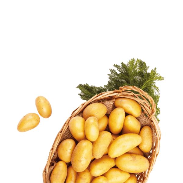 Kartoffeln Mini
