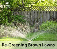 Brown lawns