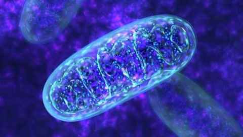 photo of mitochondria