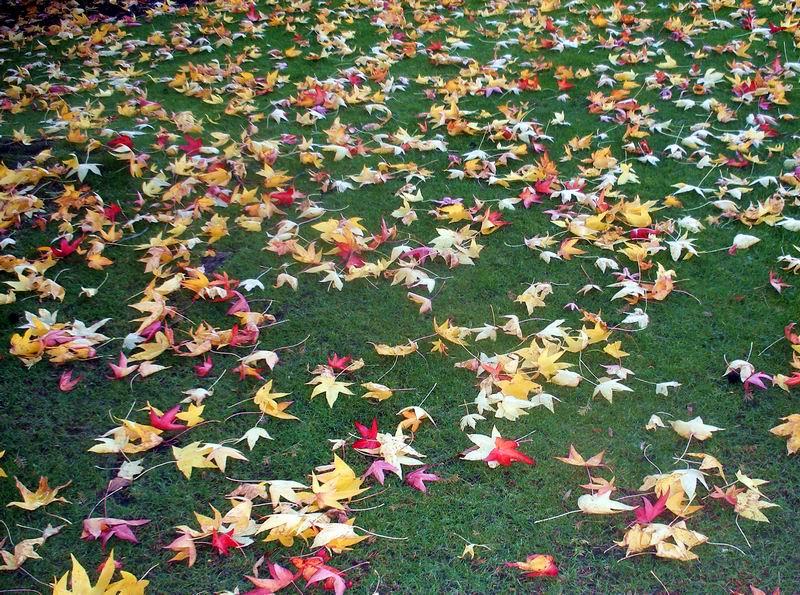 Leaf lawn 1