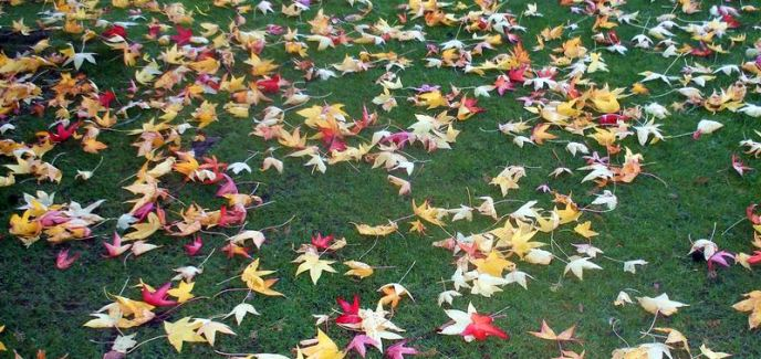 How Get Rid Leaves Without Raking
