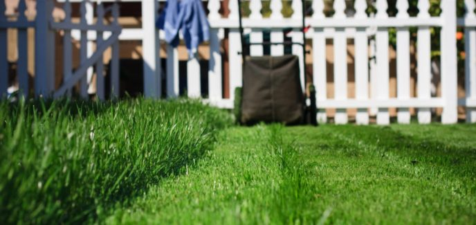 Summer Lawn Care Quick-tips