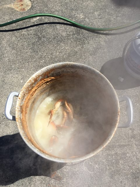 Cooking crabs in a pot of boiling water seasoned with Old Bay and Garlic