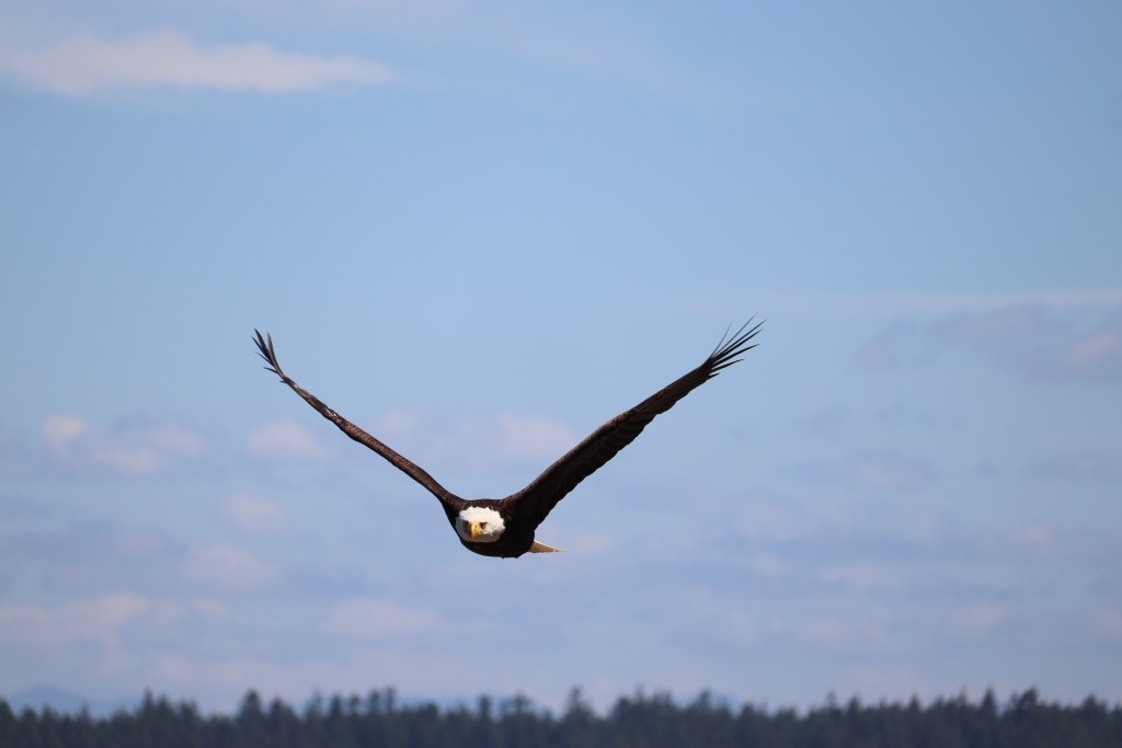 Eagle Flying Overhead