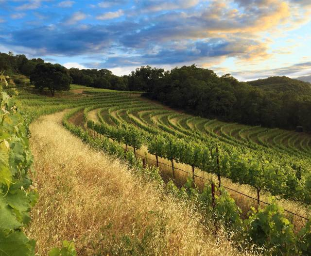 Oat seed is spread as a cover crop to hold soil on steep terraces and add nutriments.