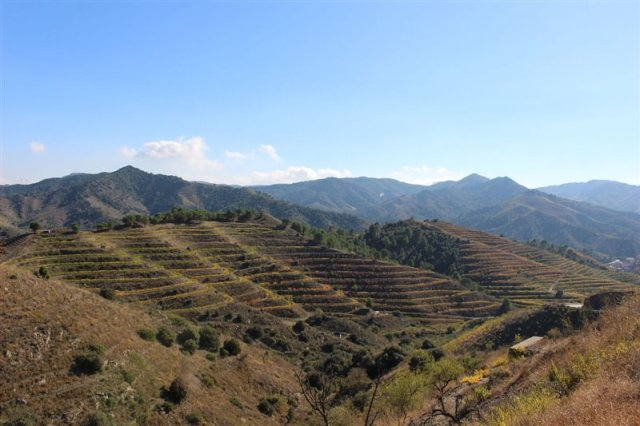 Steep hillsides in Priorat (Photo credit: Bryce Wiatrak)