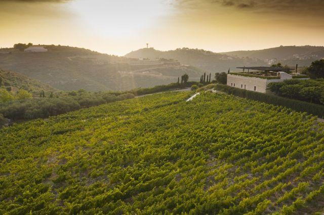 Ixsir vineyard in Lebanon.Source: Ixsir