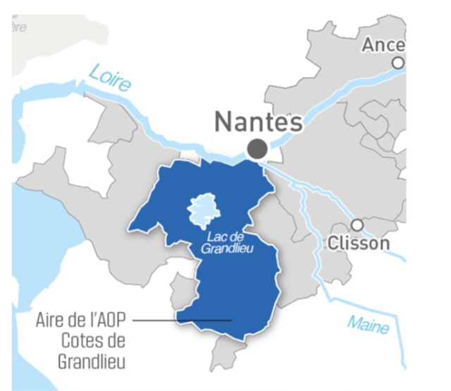 Muscadet Côtes de Grandlieu lies south west of Nantes, covering covers 19 communes in the Herbauges, Logne and Boulogne regions, alongside the lake at Grandlieu