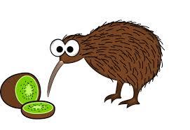 Kiwi bird with big googlie eyes looking at a sliced kiwi fruit.