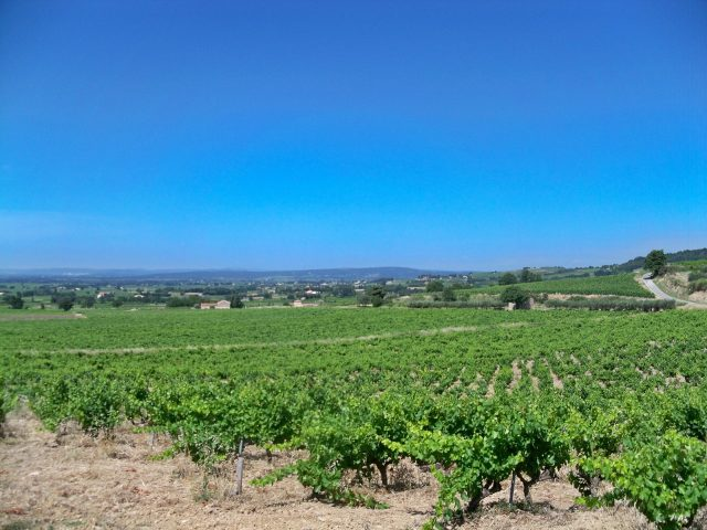 Cairanne vineyards.