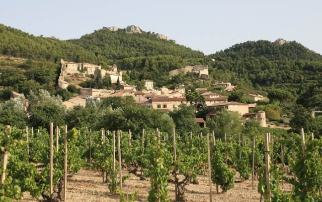 Gigondas produces red wines known for being bold, complex and able to age. When the wine reds are young they have an intense Rubis color and develops flavors of red fruits and spices. The grenache noir has to represent at least 80% in the blend.