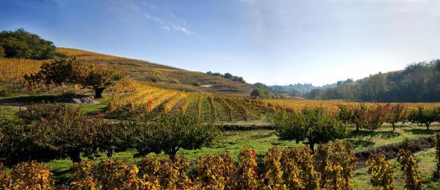 Vineyards in Crozes Hermitage, Northern Rhone, France; crozes-hermitage-wines.com