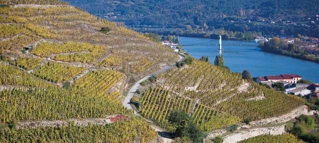 Condrieu AOC; vins-rhone.com