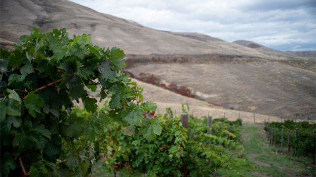 Idaho produces a relatively small quantity of wine — around 160,000 cases a year — which is less than some Napa Valley wineries crank out. Photo Credit: Idaho Wine Commission